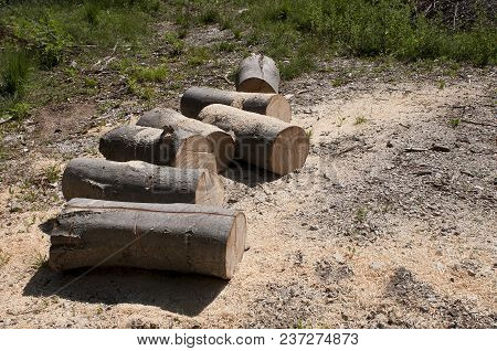 forest, trunk, woods, nature, branch, timber, industry, stack, lumberjack, pine, trees, natural, environment, firewood, cutting, forestry, bark, wood, deforestation, death, tree, leaf, germany, environmental, destruction, damage, curing, brown, broken, ba stock photo