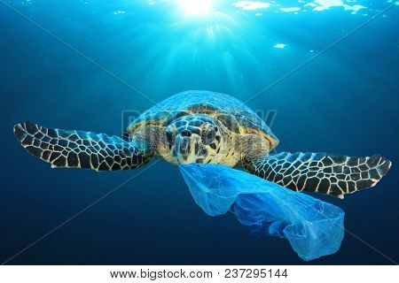 Plastic pollution in ocean environmental problem. Turtles can eat plastic bags mistaking them for je