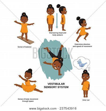 Vector illustration of human senses. Vestibular sensory system: sense of balance, maintaining head and body posture, direction and speed of movement, inner ear. stock photo