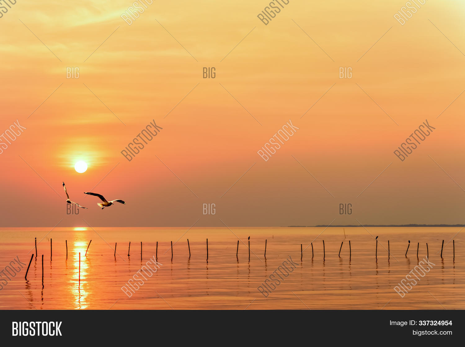 Pair of seagulls in yellow, orange sky and bright sun at sunrise, Happy animal in beautiful nature landscape for background, Two birds flying above the sea, water and horizon ocean at sunset, Thailand