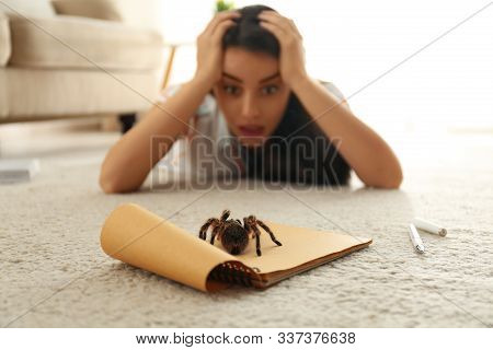 Young woman and tarantula on carpet. Arachnophobia (fear of spiders) stock photo