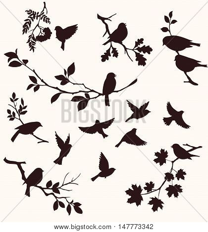 Set of birds and twigs. Decorative silhouettes of birds and tree branches