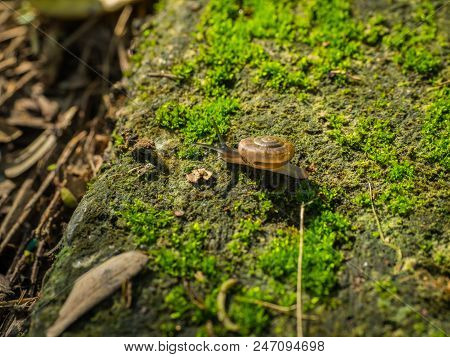 A Snail crawl on moss covered floor stock photo