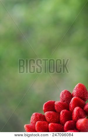 Ripe red strawberries in the lower right corner on the background of blurred trees stock photo