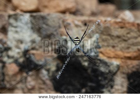 Striped spider on invisible net. Tropical fauna macro photo. Dangerous spider waiting for victim. Hunting spider in old stone temple. Abandoned place in jungle. Wild nature inhabitant. Exotic animal stock photo