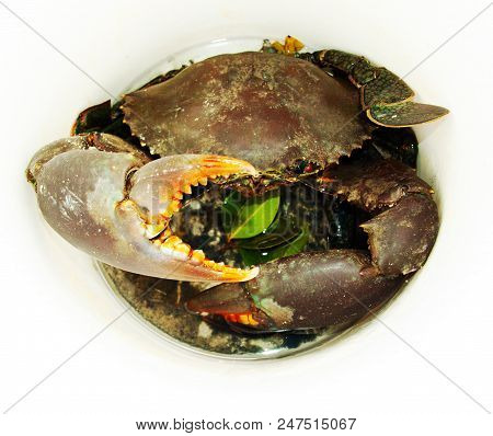 Live Australian Giant Mud Crab and mangrove leaves in a white bucket. (Scylla serrata). Also known as Mangrove and Serrated Crab. Queensland, Australia. stock photo