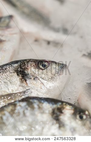fresh chilled sea fish on ice. Fresh fish from the sea to the market displayed on a thick bed of fresh ice that is not melting to retain its natural flavor and its natural appearance. Vertical photo. stock photo