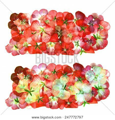 Border of red pink brown geranium perspective, part of frame made of dry delicate flowers and petals of pelargonium, isolated on white background scrapbook stock photo