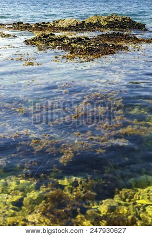 Vertical shot of sea shallow waters rocks and sea weed. stock photo