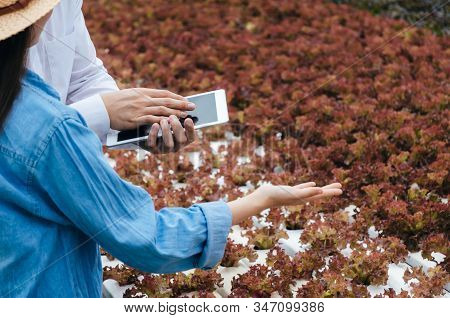 male and female farmer using mobile smart tablet computer with organic hydroponic fresh vegetables produce in greenhouse garden nursery farm, smart farming technology, agricultural innovation concept stock photo