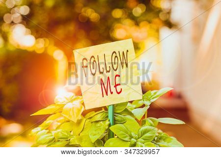 Text sign showing Follow Me. Conceptual photo Inviting a demonstrating or group to obey your prefered leadership Plain empty paper attached to a stick and placed in the green leafy plants. stock photo