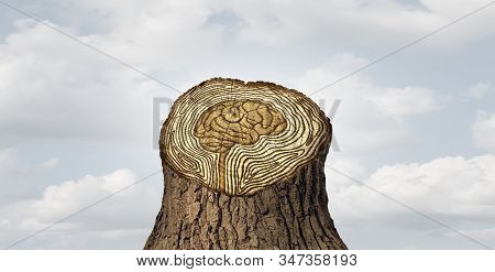 Brain aging or mind ageing as dementia cognitive function and old age memory loss changes concept and thinking or neurology life cycle and human memory health idea as tree rings in a 3D illustration style. stock photo