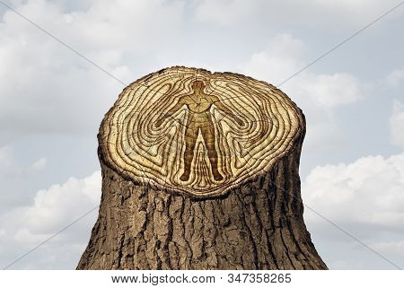 Aging or ageing as a youth and old age time changes concept and a rejuvenation as a life cycle and human health idea as tree rings in a 3D illustration style. stock photo