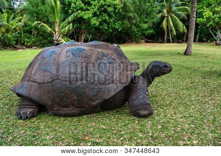 Aldabra giant tortoise, Curieuse Marine National Park, Curieuse Island, Seychelles stock photo