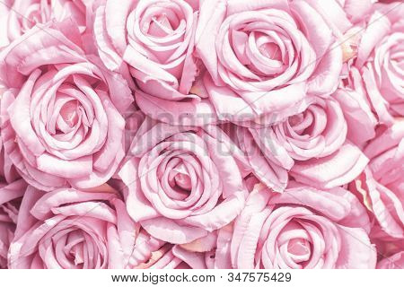 Selective focus Beautiful Pink flowers background . abstract soft sweet pink flower background .Beautiful  pink roses flower blossom flower background design floral . valentine's day backgroud stock photo