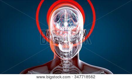 Human and brain xray, human anatomy, 3D Illustration stock photo