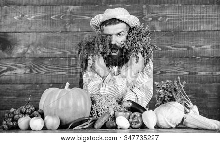 Excellent quality harvest. Man with beard proud of his harvest wooden background. Organic fertilizers make harvest healthy and rich. Organic pest control. Farmer with homegrown vegetables harvest stock photo