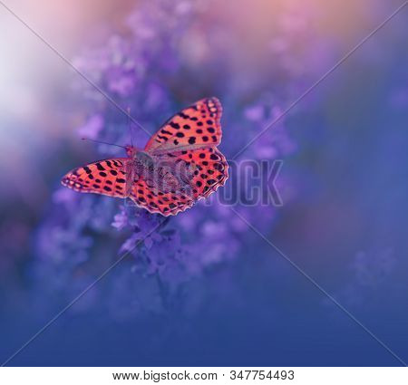 Beautiful Violet Nature Background.Floral Art Design.Macro Photography.Floral abstract pastel background with copy space.Butterfly and Lavender Field.Butterfly in Summer Background.Background with a Beautiful Butterfly on a Flower.Artistic Wallpaper. stock photo