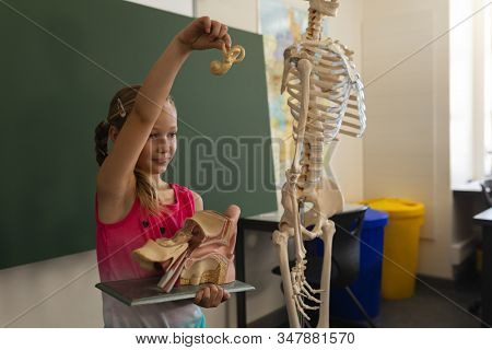 Side view of schoolgirl explaining anatomical model in classroom of elementary school stock photo