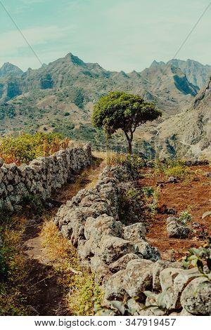 Santo Antao, Cape Verde. Plateau with Mango tree and mountain ridge view near Coculi in Ribeira Grande stock photo