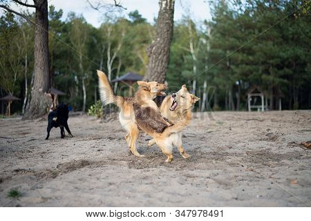 Dog fight. Dogs are fighting on the sandy shore of the lake. stock photo