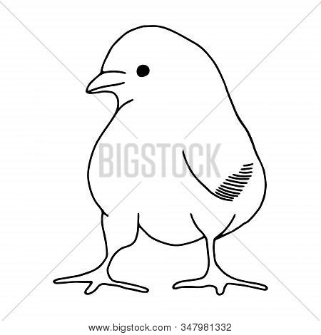 Chicken hand drawn line drawing. Contour drawing.Doodles.Drawing for Easter holiday. Little chicken.The bird home.Vector illustration stock photo
