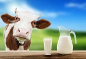 dairy animals and milk