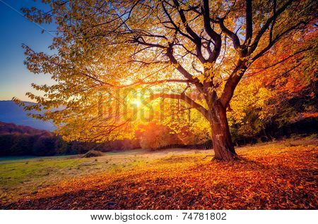 Majestic alone beech tree on a hill slope with sunny beams at mountain valley. Dramatic colorful mor