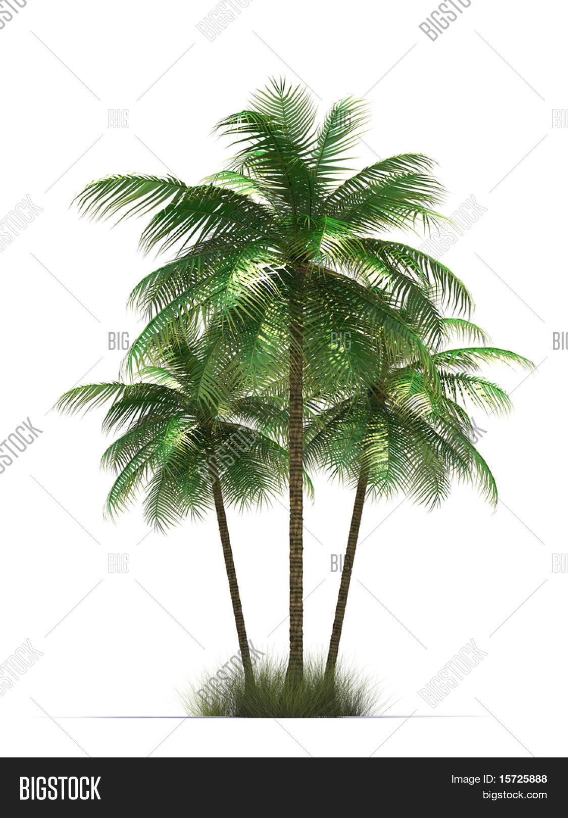 Isolated Palm Trees Symbol Of Rest Photo Stock