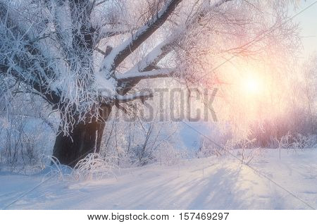 Winter landscape-winter tree in the sunrise forest. Winter landscape wonderland scene. Winter morning. Sunrise breaking through winter forest trees in the morning-winter nature. Winter landscape scene