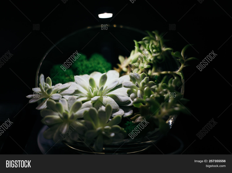 Japanese Flower Arrangement On Black Backdrop Ikebana Image Stock Photo 257355556