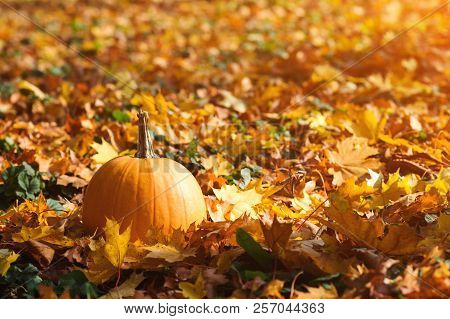 Orange Pumpkin On Autumn Leaves Background. Autumn Card With Pumpkin. Golden Autumn. Autumn Mood. Pu