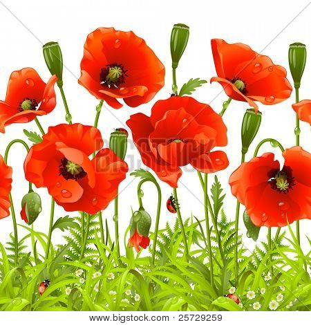 Vector seamless horizontal border with red poppy. Red flower and green grass stock photo