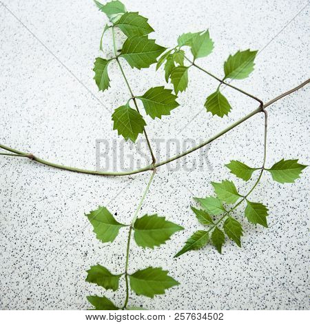 delicate delicate twigs with leaves on a concrete background closeup stock photo