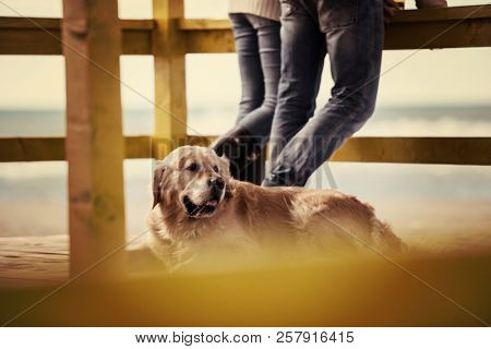 Couple with a dog Drinking Beer Together in empty beach bar during autumn time stock photo