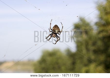 Huge spider on net in air. Dangerous insect waiting for victim. Trap is prepared to catch flies. stock photo