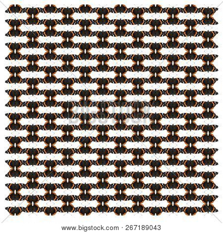 Red Admiral butterfly, Vanessa atalanta, in repeated pattern, in front of white background stock photo