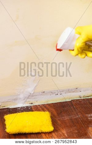 Person applying, spraying walls using antifungal agent, fungicide detergent dealing with mold in flat stock photo