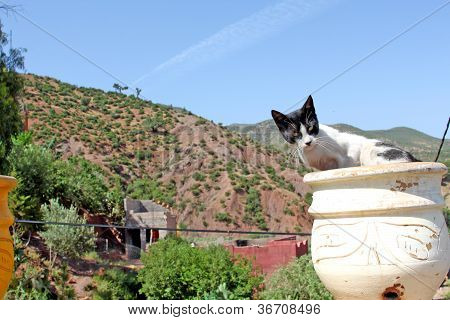 The beaytuful mountain landscape with cat foreground stock photo