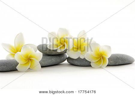 Fleur blanche dans la pile de que pierres zen