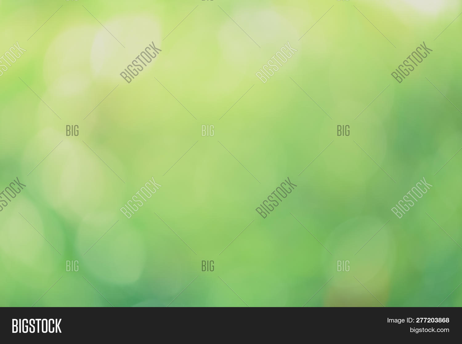 abstract,backdrop,background,beautiful,blur,blurred,blurry,bokeh,bright,bubble,circle,color,colorful,day,decorative,defocus,defocused,design,ecology,effect,focus,foliage,fresh,freshness,garden,glitter,glow,glowing,green,greenery,leaf,light,lush,natural,nature,pattern,plant,round,season,shine,shiny,soft,sparkle,spring,summer,sun,sunlight,sunny,texture,twinkle