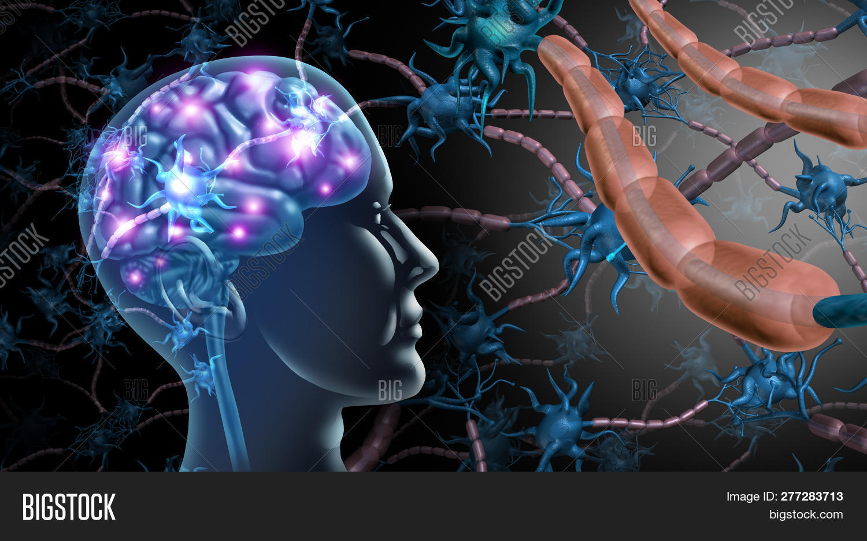 3D,MS,alzheimer,anatomy,autism,autistic,axon,biology,brain,cells,concept,dendrites,electrical,elements,fibres,function,health,illustration,impulse,macro,medical,medicine,mental,microbiology,mind,multiple,myelin,nerve,nervous,neural,neurological,neurology,neuron,neuroscience,parkinsons,psychiatric,receptor,research,science,sclerosis,synapse,system