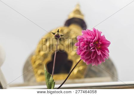 beautiful pink flower in front of buddhist shrine stock photo