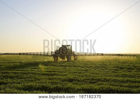Tractor with high wheels is making fertilizer on young wheat. The use of finely dispersed spray chemicals. Tractor on the sunset background. stock photo