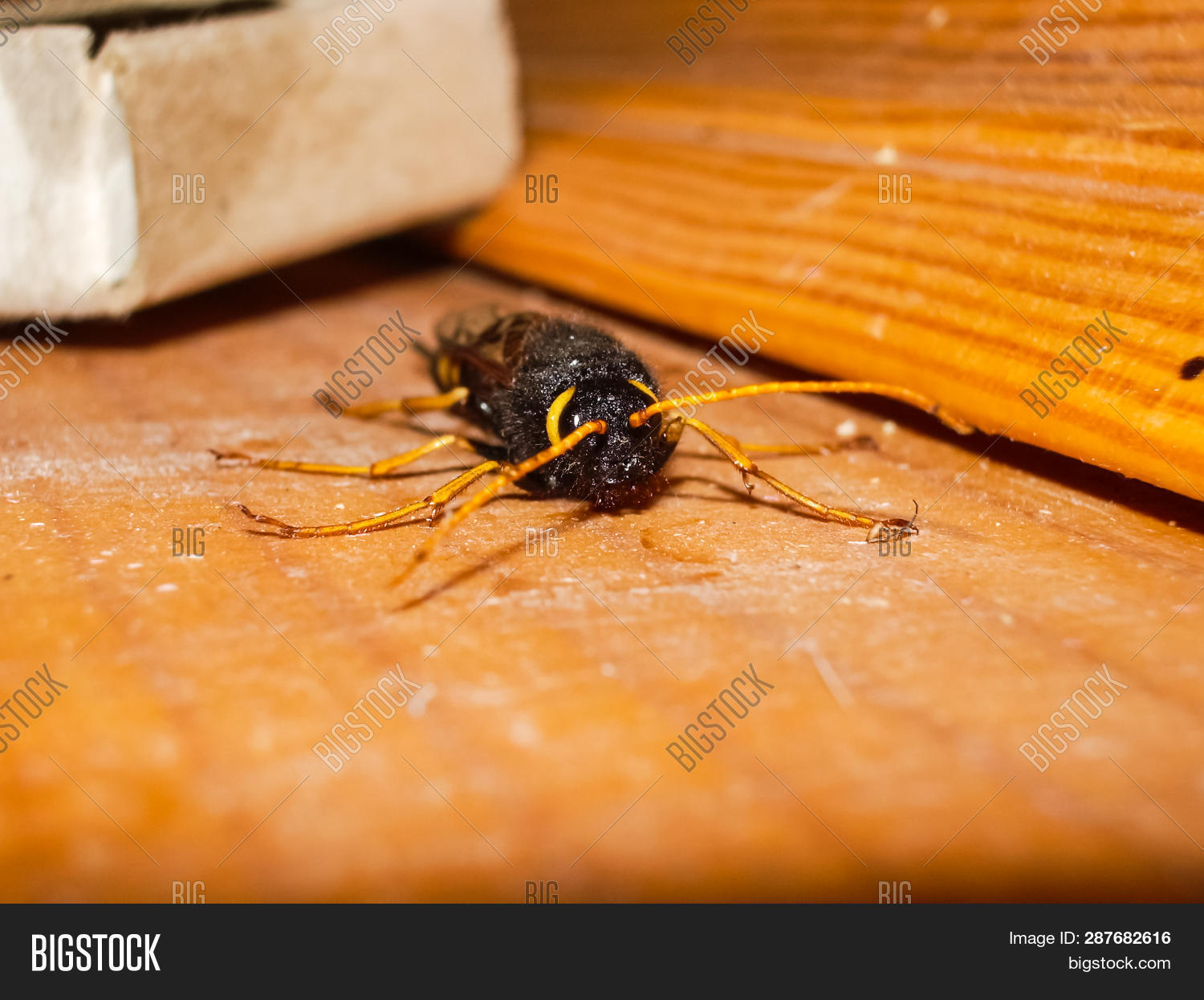 abdomen,animal,antennae,beautiful,bite,black,build,calm,chambers,chitin,clay,close-up,closeup,collect,colony,creature,dangerous,drink,fly,geometric,glide,hexagon,hive,honey,honeycomb,insect,macro,medicine,nature,nest,nobody,outdoor,pain,paunch,paws,pollen,predator,public,rider,sting,stinger,striped,useful,vespiary,wasp,wings,yellow