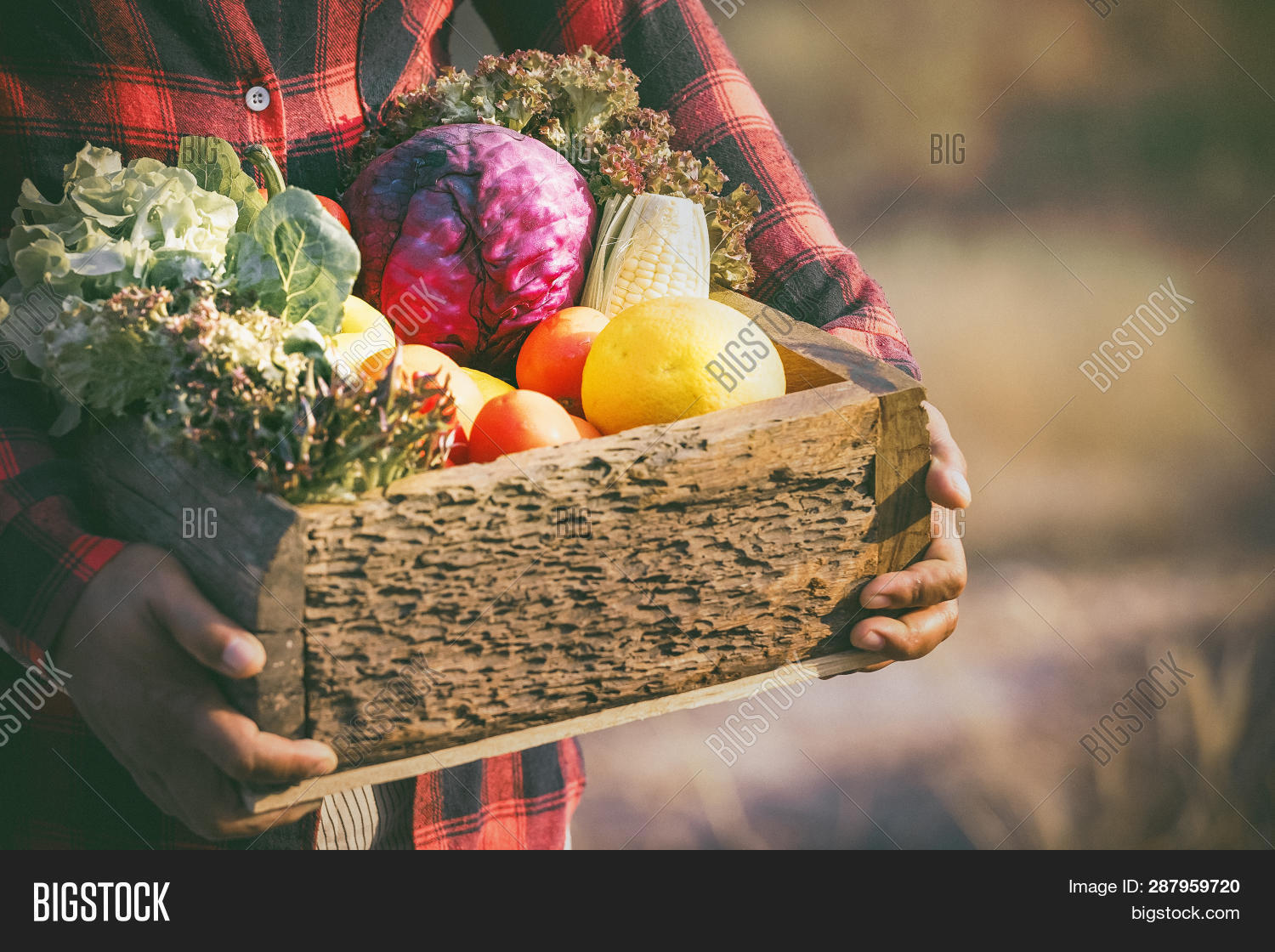 abundance,agriculture,background,basket,beetroot,box,cabbage,carrot,color,cooking,corn,crate,diet,eating,eggplant,farm,farmer,fennel,food,fresh,freshness,fruit,green,harvest,health,healthy,herbs,kitchen,leaf,lettuce,market,menu,natural,nature,nutrition,organic,pepper,ripe,rural,rustic,salad,space,spices,summer,tomato,vegetable,vegetarian,wood,wooden