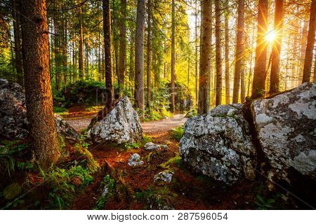 Enchanted woods in the morning sunlight. Fairytale forest in autumn. Location place Germany Alps, Europe. Wonderful natural background. Scenic image of wilderness. Discover the beauty of earth. stock photo