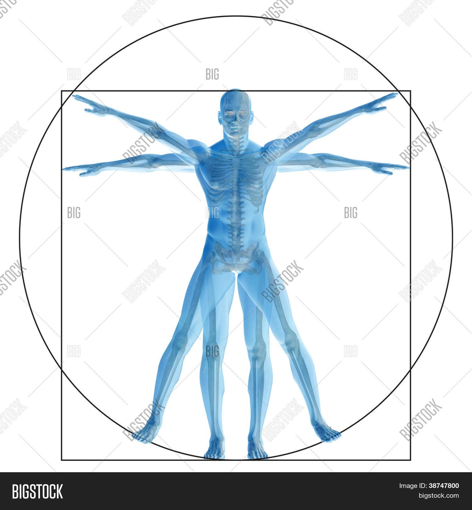 High Resolution Vitruvian Human Or Man As Conceptmetaphor Or