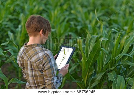 Female agronomist with tablet computer in agricultural cultivated corn field. ** Note: Shallow depth of field stock photo