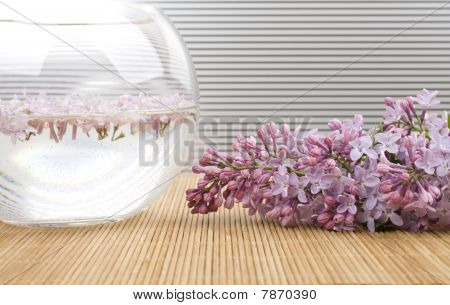 Scenery. A branch of lilacs near the bowl with water in which floated flowers stock photo